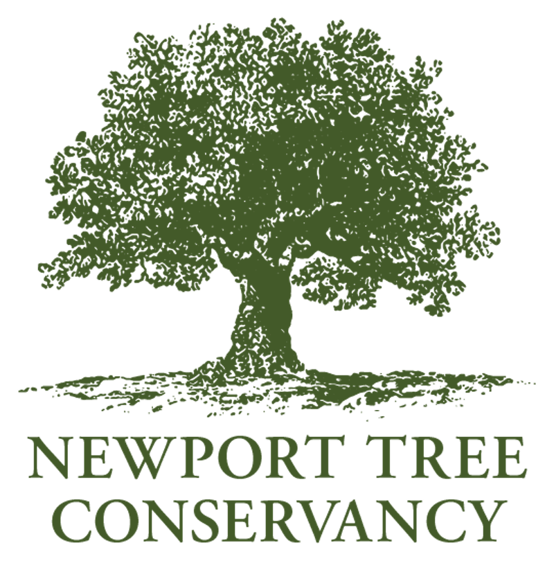 Planting for the Future While Preserving the Past: The Redwood's European Fernleaf Beech